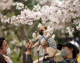 Allow Today to Be as Beautiful as This Puppy in a Cherry Blossom Tree