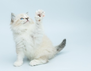 Paws up for This Feline Memory Match