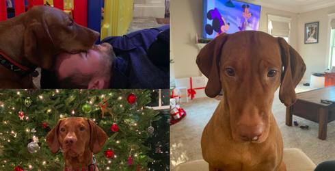 #PetStats: Bauer the Vizsla Gets a Gold Medal in Cuddling