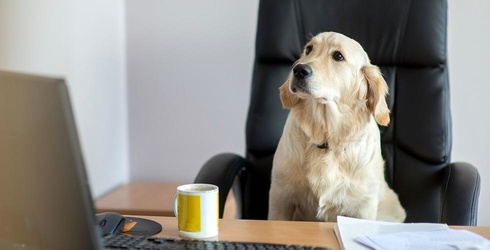 """""""Bring Your Dog to Work Day:"""" the Ultimate Photo Round-Up"""