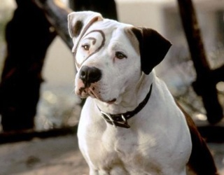You'll Be Barkin' up the Wrong Tree If You Can't Match the Dog to Its Movie