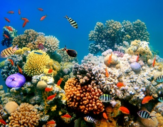 Just Keep Swimming Through This Coral Reef Puzzle