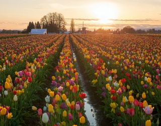 Weekend Wanderlust: Get Lost in the Biggest Blooms of These Flower Fields