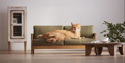 Feline Furniture Is Now a Thing in Case You Needed Another Reason for Your Cat to Hate You