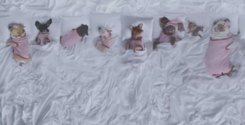 """Watch These Celebrity Dogs Recreate Kanye West's """"Famous"""" Music Video for Charity"""