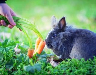 Myth Mayhem: Should Animals Really Eat the Foods They Eat in Cartoons?