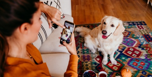 Dogs, Too, Enjoy an Internet Trend, Evidenced by This Video