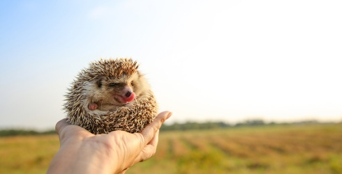 Happiness Is a Scroll Through Herbee the Hedgehog's Instagram