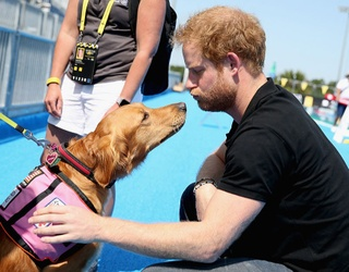 A Memory Match of Too Many Prince Harry + Dog Photos Is Never Enough