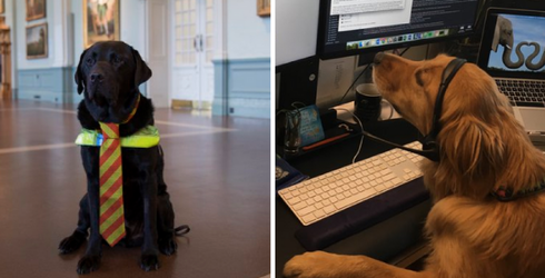 """My Co-Workers Forgot It's """"Take Your Dog to Work Day"""" so All I Have Are These Photos"""
