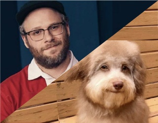 Seth Rogen Looks Identical to This Dog and We Won't Hear Anything Else About It
