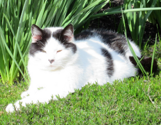 #PetStats: Oreo is the Best Porch Napper He Knows