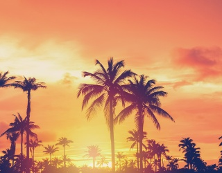 Join the Palm Trees in Watching the Sunset in This Puzzle