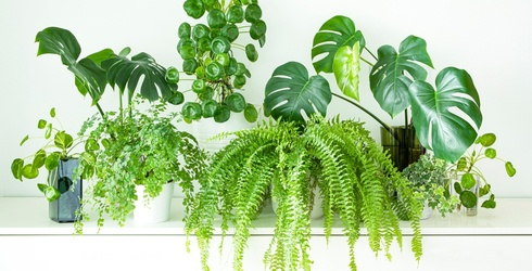Test Your Green Thumb With This Houseplants Trivia