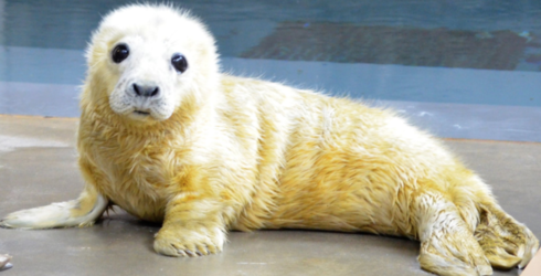 This Twitter Battle of Animal Cuteness Will Melt Your Heart