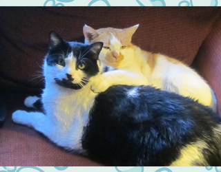 #PetStats: Fred and Ginger Are Double Trouble