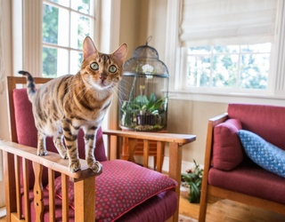 Cabinet of Curiosities: Are Cats Magical Nine-Life Beings?