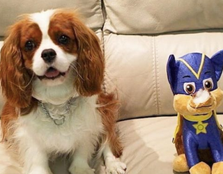 Tweets of the Week: Plush Toys Are Friends, Not Food