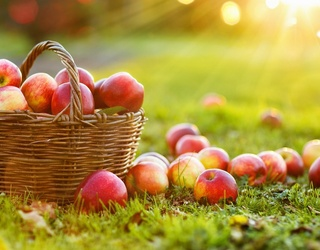 Try This Apple-solutely Juicy Apple Trivia