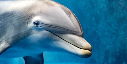 Answer These 5 Questions About Dolphins & We'll Tell You What Your New Year's Resolution Should Be