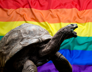 Long Live Jonathan, the Gay Tortoise Who Reigns Supreme as the Oldest Living Land Creature
