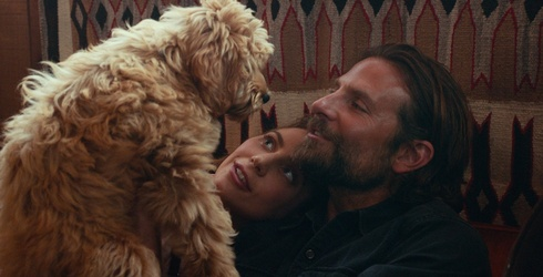 Does Bradley Cooper's Dog Deserve an Oscar More Than the Actor?