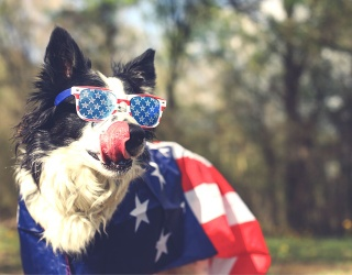 Find All The Differences in These Photos of Patriotic Pups