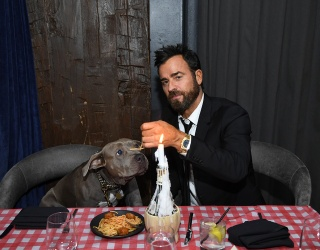 Can I Swap Places With Justin Theroux's Dog?