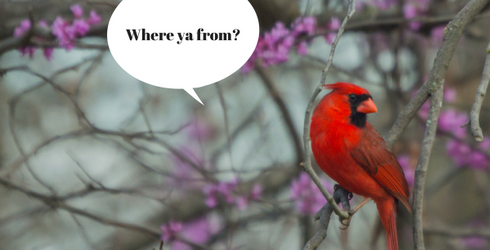 We're Ruffling Your Feathers by Testing Your State Bird Knowledge