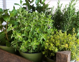 Pep up Your Meals With a DIY at-Home Herb Garden