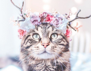 This Cat Knows How to Work a Flower Crown Almost as Well As Beyoncé