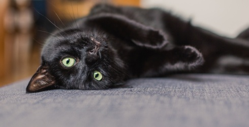 Will the Piercing Eyes of Black Cats Distract You From Acing This Memory Match?