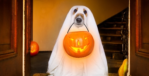 Tell Us Your Halloween Plans and We'll Pick out a Costume for Your Dog