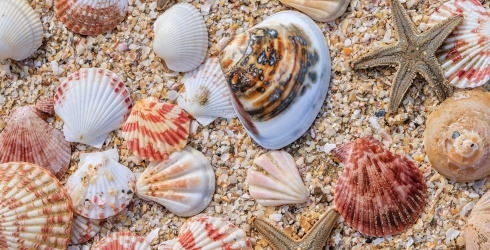She Sells Seashells by the Sea Shore, but You'll Be Solving This Puzzle