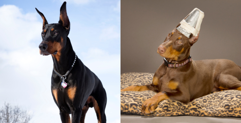 The Pet You Thought You Were Getting vs. The Pet You Actually Got