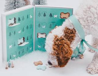 Wish Your Favorite Pupper a Happy Pawlidays With a 2019 Dog Treat Advent Calendar