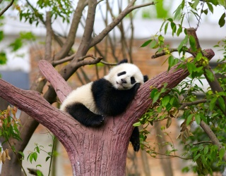 Monday Memory Madness: Don't These Panda Bears Just Make You Want to Cuddle?