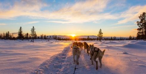 Mush! Let Us Know Where You're Going After You Finish This Dogsled Puzzle