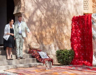 """Cat Claims Harry and Meghan's Royal Rug for Itself: """"This Is Mine Now"""""""