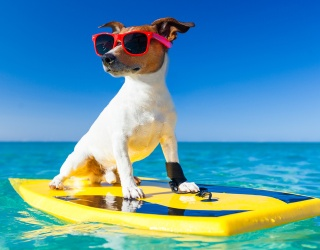 Surf's Pup! Help Us Match These Adorable Dudes
