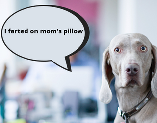 Dogs Tell Funny Stories About Their Owners...Using Siri