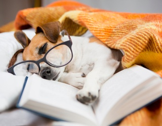 These Dogs Just Want to Know What You're Reading While You Complete the Memory Match