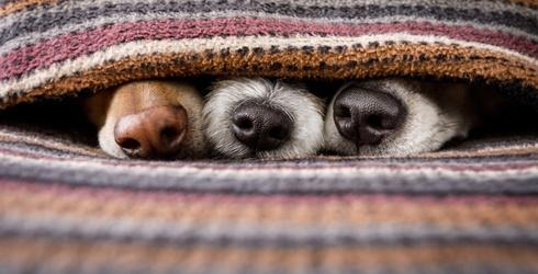 Cat Got Your Tongue? No Worries, We've Got Puppy Noses Instead