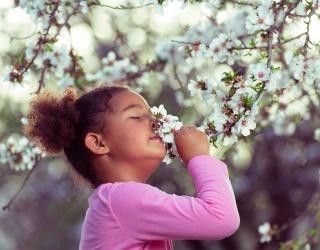 Can You Make Sense of the Science of Smell?