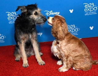 Lady and Tramp Themselves Got the Red Carpet Treatment and Nothing Else Matters This Week