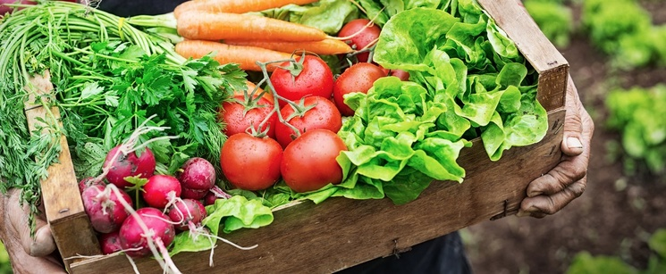 Helpful Tricks to Tell if Your Veggies are Ripe and Ready to Eat