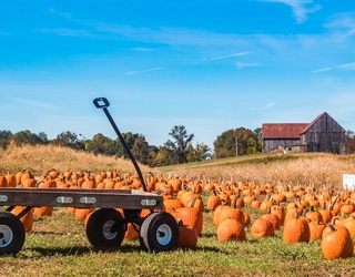 How Much Do You Know About Pumpkins?