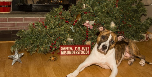 7 Dogs Who Want to Ruin Your Christmas Tree