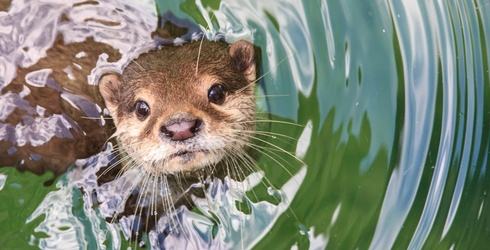 You Won't Believe How Otter-ly Adorable This Puzzle Is