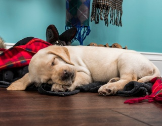 Can You Complete the Memory Match Before This Puppy Wakes Up?